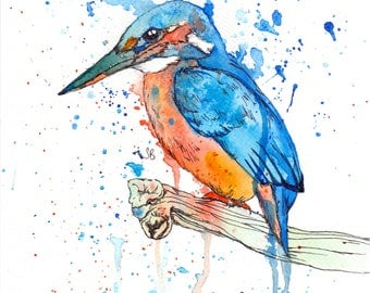 A4 Kingfisher Print