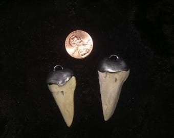 Coyote tooth pendant