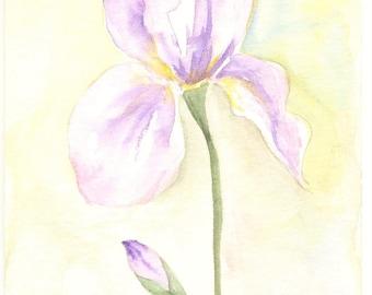 IRIS - Original watercolor with passe partout