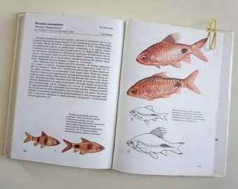 Vintage Illustrated Fishbirds Book | Vintage Fish Illustrations | Fish Illustrations | Zoology book