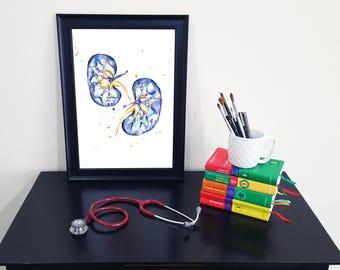 Medical Anatomy Art- Stunning Watercolour Kidney PRINT