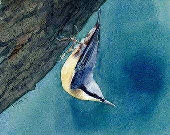 Nuthatch - Watercolor Print - Art Print - Watercolor - Blue Nuthatch - Bird Print - Bird Art