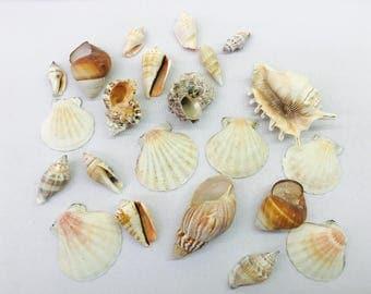 22 Piece Seashell set-Decorative Shells-SeaShell Pendants-Beach Shells
