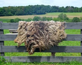 Churro Sheep Fleece - Samantha - 4.25 lbs.