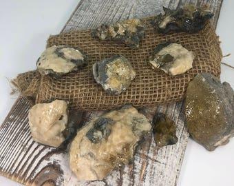 Fossilized Clam With Golden Honey Calcite Specimen - Natural Gemstone - #C24