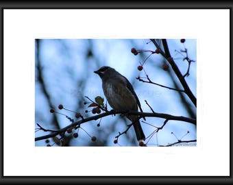 Photography, Free Shipping, Print, Framed Print, Canvas Wrap, Canvas with Floating Framed, Wall Art, Home Decor, Nature Photography, Art