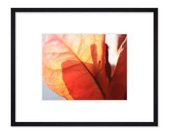 Landscape Photography - Autumn Leaves