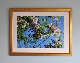 Tree blossom in Sussex, flowers, English countryside, photo print, Photography, Picturesque print, England,