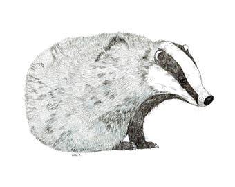 Beautiful Mr Badger, wildlife, countryside