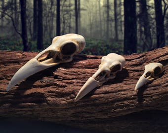 Raven skull available in 3 sizes