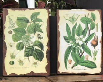 4 Pack Botanical Signs, Botanical Decor, Garden Themed Decor