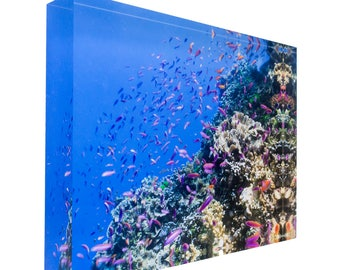 Fish on tropical coral great barrier reef 30x20x3cm Acrylic Photography Print