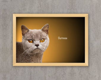 Burmese - Cat breed poster, wall sticker, nursery decor, cat print, wall print, nursery print, shabby print | Tropparoba 100% made in Italy
