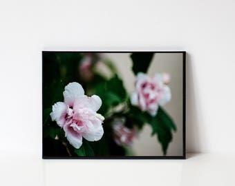 Light Pink Flower Print - Digital Print, Flower Print, Romantic Print, Tropical Print, Tropical Art, Flowers, Light Pink Flowers, Romantic