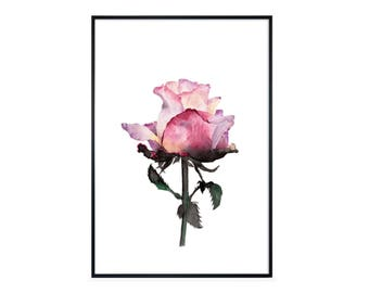 Watercolor painting FINE ART PRINT 'rose' flower, flower, pink