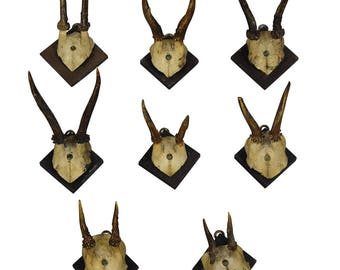 eight antique black forest deer trophies ca. 1900