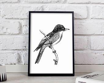 Tyrant Flycatcher Bird poster, Tyrant Flycatcher Bird wall art, Tyrant Flycatcher Bird wall decor, Tyrant Flycatcher Bird print
