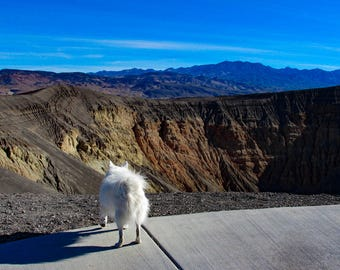Ubehebe Crater ~ White Dog Collection