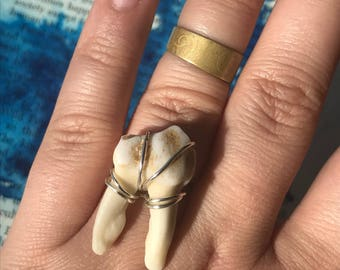 Deer Cheek Tooth  Ring