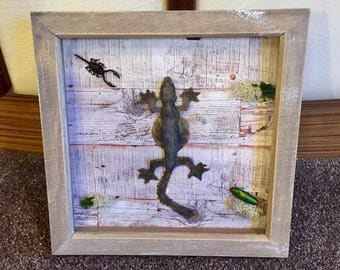 Taxidermy parachute gecko lizard