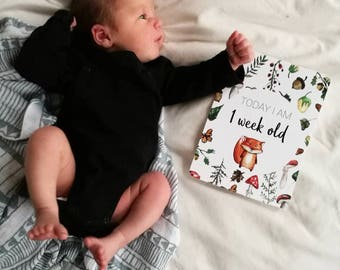 Woodland Animals themed Baby Milestone Cards -  A5, Forest Animals, New Baby