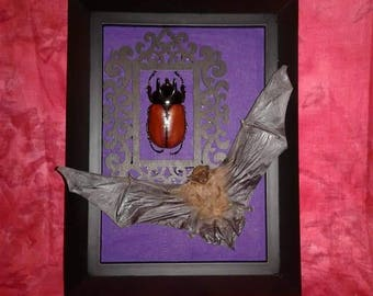 Bat and beetle frame real mummified bat and rhinoceros beetle on a black and purple frame oddities taxidermy preserved