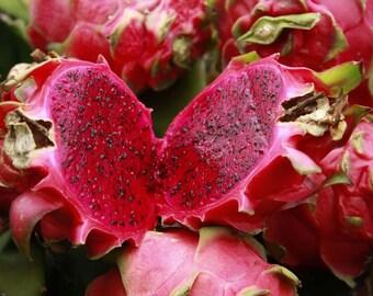 Dragon Fruits Plant - Pink