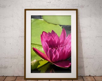 Pink Waterlily, downloadable art, flower photography, floral print, waterlily print, nature photo, pink flower print, 9x12 printable photo