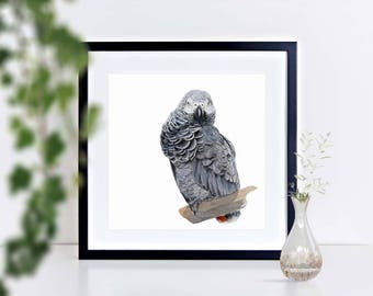 African Grey Parrot - limited edition signed print, framed or mounted