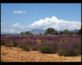 Photo 30X40cm fields of lavender Valensole tray