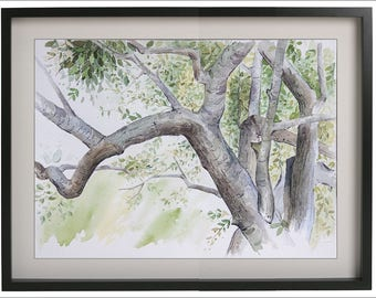 Original Watercolor Painting, Old Trees