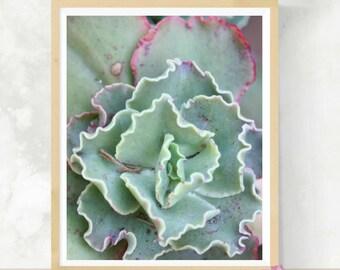 Succulent Art Print | Cactus Photo | Botanical Print | Nature Photography | Garden Nursery Decor | Newlywed Gift | Succulent Decor