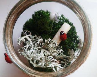Personalised Terrarium Kingdom with Secret Scroll - Lichen and Ladybird