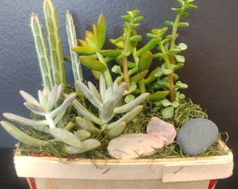 Succulents in a strawberry basket