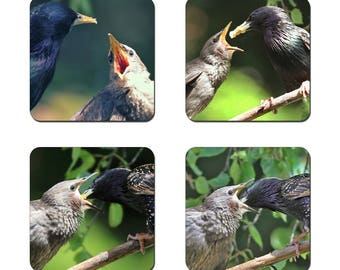 Set of 4 Starlings drinks coasters featuring award winning photography by UniquePhotoArts.
