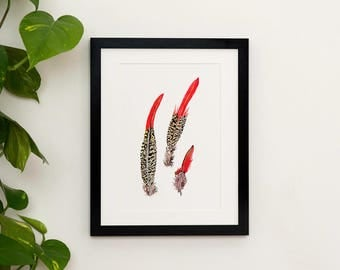 Golden Pheasant Feathers Print