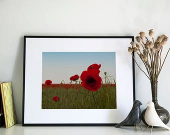 Poppy Field, Photographic Print, 11x14