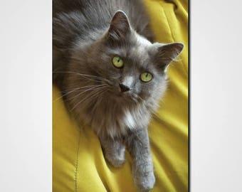 """Painting """"gentle cat"""" cat print"""