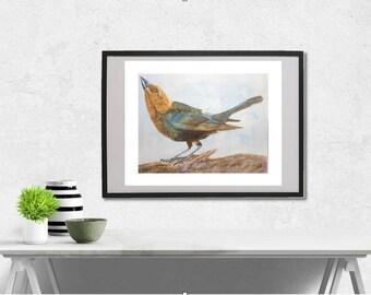 Brown-headed Cowbird watercolor painting