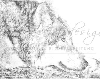 Digital download for your own prints-motif wolf in sketch style