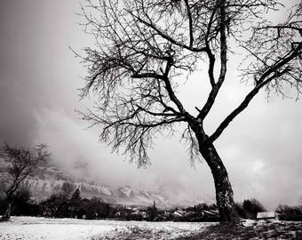 Trees on my way - fine art photo - available on several papers, materials and sizes!
