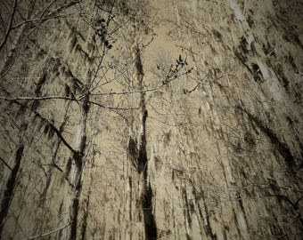 Trees - Downloadable Print