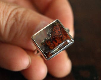 Tiny Terrarium,  an East Java Plume and silver ring