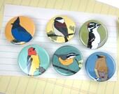Woodland Bird Pins | Pack of 6 | wild bird art birder gift nature lover songbird outdoorsy original illustration colorful modern birds