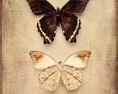 25% Memorial Day Sale butterflies underbelly sepia insect PRINT ONLY nature bathroom decor home decor nursery decor