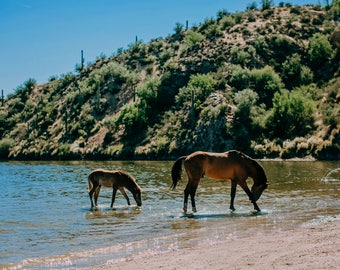 Wild Horses of the Salt River Fine Art Print #2