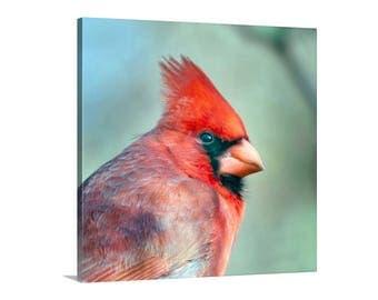 Cardinal Bird Art, Red Cardinal, Square Photo, Bird Photography, Wildlife Art, Canvas Wrap Photo, Square Art, Gift for Bird Lover, Tucson
