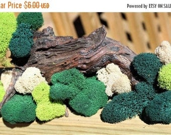 Save25% Reindeer moss-Deer foot moss-Fluffy Lichens-2 oz bag Preserved Lichens-4 Colors in assorted sized spongy soft balls