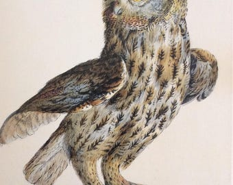 Tawny Owl by Violante Vanni,   1990s Reproduction Colorplate, Book Plate, 10 x 14 in. Book Page Print, Bird Print, Ornithology Print