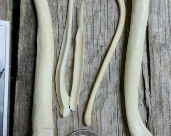 Bacula Bones- 5 Baculum- Coyote Fox Badger Otter Real Bones- Lot No. 170610-YY